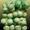 Сетка для овощей,  сетка-рукав  д/овощей от ООО Эталон #301505