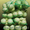 Сетка овощная,  сетка-мешок и сетка-рукав по низким ценам в любом количестве!!!