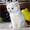 Кошечка с голубыми глазами #1137824