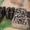 Продам пресс-ножницы комбинированные НГ5224, НГ5222, гильотины молота инструмент - Изображение #3, Объявление #1181845
