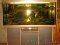 Срочно продам аквариум вместе с рыбами и аксесуарами!!!